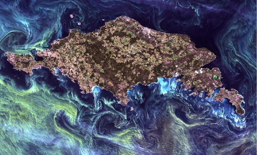 scotland algae